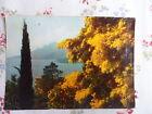 La Côte d'Azur, miracle de la nature - Printemps sur la Côte d'Azur, les mimosas