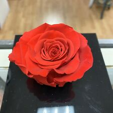 Real Preserved Single Red Rose In A Box