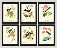 Unframed Hummingbird Print Set 6 Antique Pink Flowers Tropical Wall Art Decor
