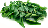 Dried Curry Leaves Koenigii Murraya Organic Natural Leaves from Ceylon 50g