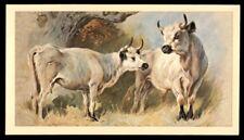 Grandee British Mammals 1982 - White Cattle No. 27