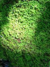 Sheet Moss (1 Quart Ziplock)