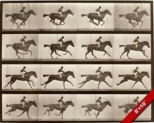 ANIMAL HORSE LOCOMOTION PHOTO EXPERIMENT AMIMATION ART REAL CANVAS GICLEEPRINT