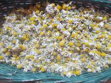 CAMOMILE Tisane THÉ Fleurs seché Bio, CHAMOMILE TEA Flowers 25gr Naturel