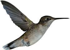 Ruby Throated HUMMINGBIRD in flight - Sun Catcher Window Cling Decal Sticker NEW