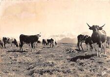BR48795 le Mont dore cow vaches paturages sur les haute plateaux      France