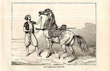 Stampa antica GUERRIERO MAMELUCCO con il suo CAVALLO 1892 Old print horses