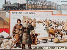 Antique samoyed husky sled dogs Samojeden reindeer tundra train ephemera Ad*