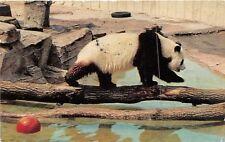 POSTCARD   ANIMALS    GIANT  PANDA