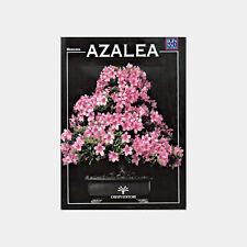 Manuale Bonsai Azalea.