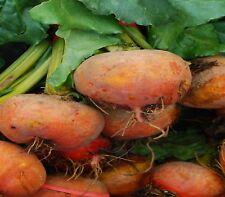 Beetroot Golden 30 vegetable garden seeds NOT FOR WA OR TAS
