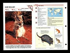 Hare Wallaby Wildlife Fact File Mammal Animal Card Home School Study 1.322