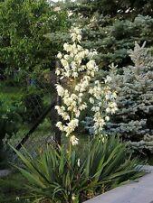 Plant Plug/Seedling