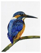 A4 Kingfisher Bird Watercolor Painting Signed Limited Edition Print Wildlife Art