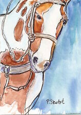 ACEO Paint Horse Painting Watercolor+Pen Loose Style Art Painting Penny StewArt