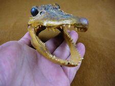"""(G-Def-248) 4-1/8"""" Deformed Gator ALLIGATOR HEAD jaw teeth TAXIDERMY"""