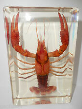 Large Red Lobster Freshwater Crayfish Clear Block Education Animal Specimen