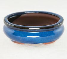"Oval Mame Shohin Bonsai / Cactus & Succulent Pot  6""x 5""x 2"" - Dark Blue Stain"