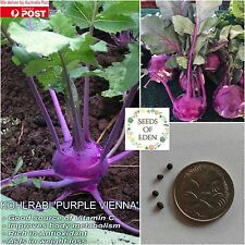 75 KOHLRABI 'PURPLE VIENNA' SEEDS (Brassica oleracea); Delicious vegetable