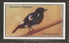 GALLAHER-ZOO TROPICAL BIRDS (1ST SERIES)-#41- PIED BUSH CHAT