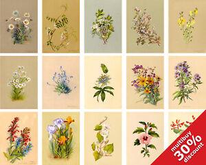 Botanical VINTAGE FLOWERS by Deborah G Passmore A2 A3 A4 A5 A6 Home Floral Decor