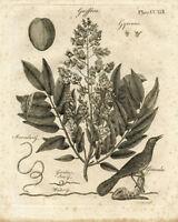 Vintage Botanical Plant - Vintage Art Print Poster - A1 A2 A3 A4 A5
