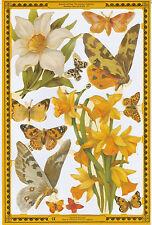 Chromo Le Suh Fleur Jonquille Papillon A133 Flower Butterflies