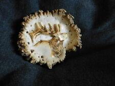 hand carved Elk Antler Belt Buckle ... ELK HEAD Signed Frickey 82