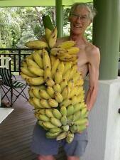 10 Banana Tree Fruit Seeds Organic - Musa Acuminata Dwarf Herb USA - BKSeeds