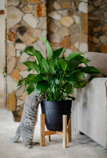 Mid Century Plant Stand | Planter Stand | Potted Plant Stand | Modern Planter |