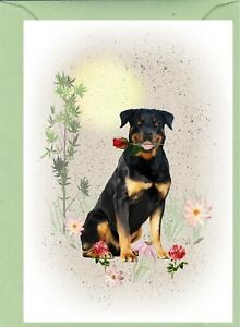 "Rottweiler Dog (4""x 6"") Blank Card ideal Mothers Day, Birthday, Valentines etc."