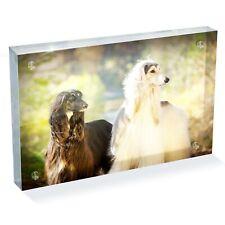 "Beautiful Afghan Hounds Dog Photo Block 6 x 4"" - Desk Art Office Gift #16056"