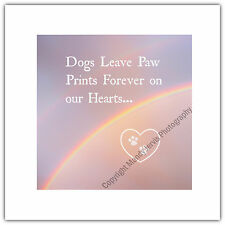 Greetings Card Dog Pet Sympathy Condolences Sorry Loss Rainbow Bridge Paw Prints