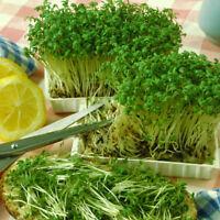 Seeds Salad Lettuce Watercress Ajur Wild Vegetable Organic Heirloom Ukraine