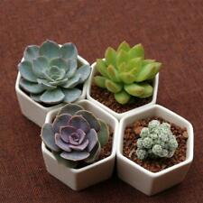 1x Mini White Ceramic Succulent Planter Miniature Flower Pots Garden Planter Pot
