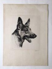 German Shepherd / Berger allemand / gravure signée Eberhardt Allemagne XXe