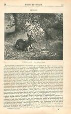 Cerf Faisant ses Bois Dessin de Charles Bodmer GRAVURE ANTIQUE OLD PRINT 1863