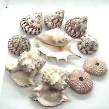 10 Piece Large Pink Craft Pack Sea Shells & Urchins - Beach, Coastal Decor