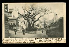 Sussex BEXHILL-ON-SEA Old Town Tree used 1905 PPC Cigar Divan Toilet Club