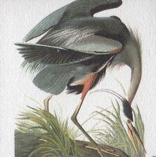 "AUDUBON BIRDS ""GREAT BLUE HERON"" STUNNING BLUE BIRD Color Art CANVAS MAGNET"