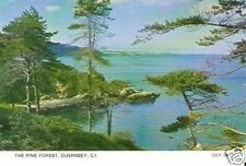 "CHANNEL ISLANDS ""Pine Forest"" old picture postcard P/C post card"