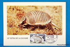 LE TATOU DE GUYANE   Carte Postale Maximum FDC Yt C 1819