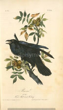 Raven 6x4 Inch Print Bird Nature Art America Crow Plants Vintage