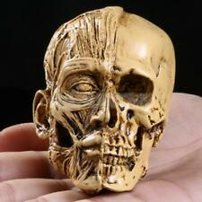 Realistic Model Anatomy Skull Head Drawing Figurine Statue Skeleton Yellow