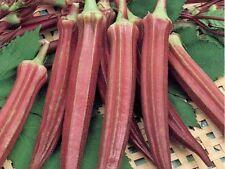 Red Burgundy Okra Seeds (25). Abelmoschus esculentus. Non-GMO. Free Shipping!