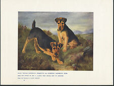 WELSH TERRIER NAMED DOGS ANTIQUE DOG ART PRINT FROM 1907 BY LILIAN CHEVIOT