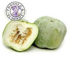 Rare Benincasa hispida winter melon Vegetable 5 seeds UK SELLER