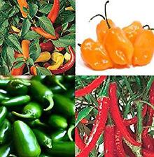 Liveseeds-Chile Semillas jalapeños, húngaro, habanero, Anillo O incendios 15 semillas