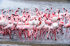 More details for beautiful pink flamingo canvas picture #3 stunning wildlife a1 canvas free p&p