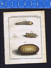 WORMS - Caribaeorum Terrestrial -Roesel/Rosel Insecten 1749 Engraved Print